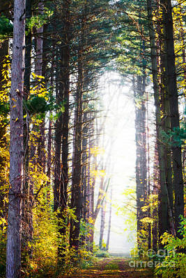 Photograph - A Path In The Pines by Michael Arend