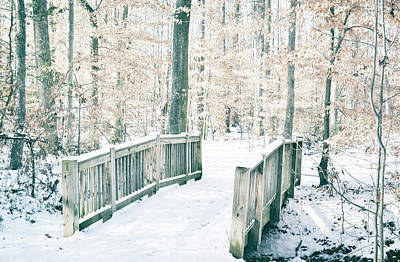 Photograph - A Path In The Snow by Michelle Ayn Potter