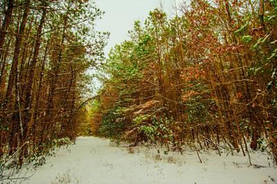 A Path In Winter  Art Print by John Harding