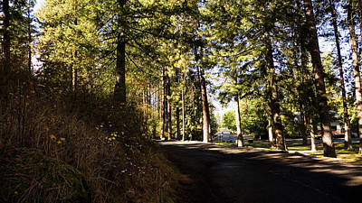 A Peaceful Walk Original