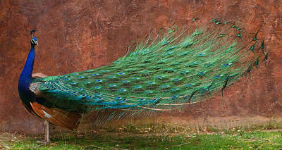Digital Art - A Peacock Dp by Ernie Echols