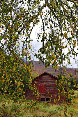 Photograph - A Peak Of Fall Red Barn by Terry DeLuco