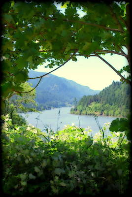Photograph - A Peek At The Columbia River by Kathy Sampson
