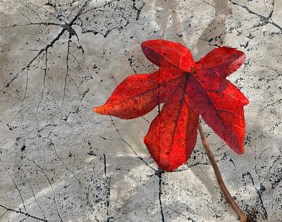 Photograph - A Perfect Fall Red by Sandi OReilly