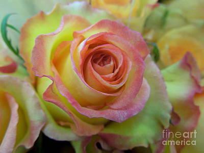 A Perfect Rose Art Print by Renee Trenholm