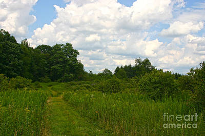 Photograph - A Perfect Summer Day by Jeannette Hunt