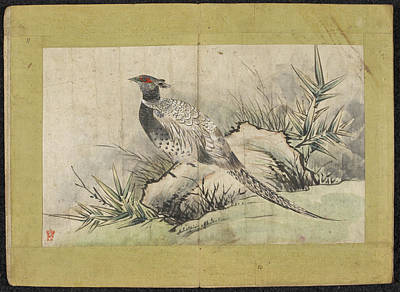 Pheasant Photograph - A Pheasant by British Library