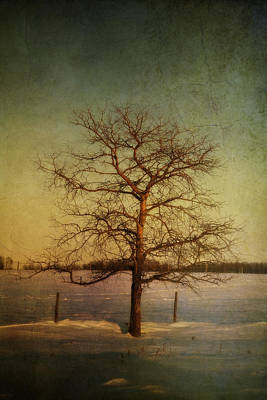 A Pictorialist Photograph Of A Lone Print by Roberta Murray