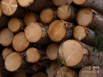 A Pile Of Logs  Art Print