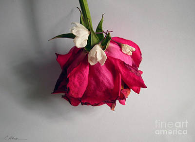 Wedding Flowers Ideas Photograph - A Pink Rose And Three Pretty Maids Attending.  by Cathy Peterson