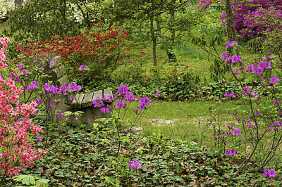 Photograph - A Place For Contemplation - A Bench In The Garden by Jane Eleanor Nicholas
