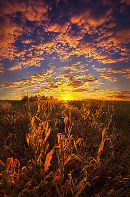 Fall Leaves Photograph - A Place You Call Home by Phil Koch