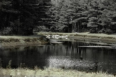 Photograph - A Pond by David Yocum
