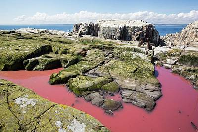 A Pool Coloured Red From Algae Art Print by Ashley Cooper