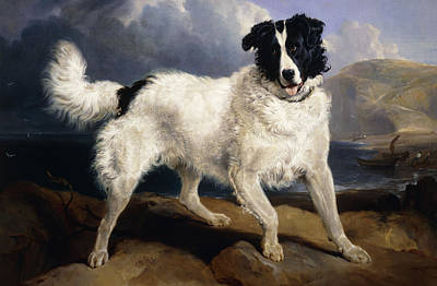 Dog Close-up Painting - A Portrait Of Neptune by Sir Edwin Landseer