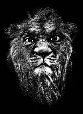 Photograph - A Portrait Of The Artist As A Young Lion by Meirion Matthias