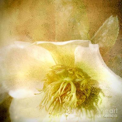Photograph - A Prayer by Chris Armytage