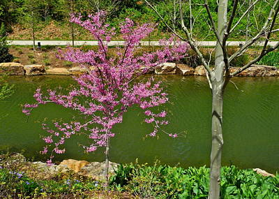 Photograph - A Pretty Pink Tree Along A Stream by Kirsten Giving