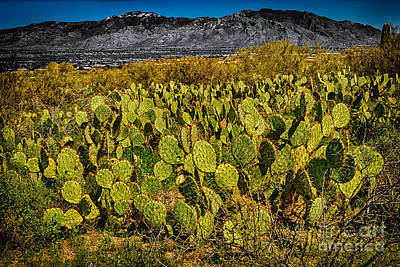 Mark Myhaver Royalty Free Images - A Prickly Pear View Royalty-Free Image by Mark Myhaver