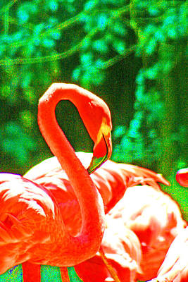 Photograph - A Proud Flamingo by Joseph Coulombe