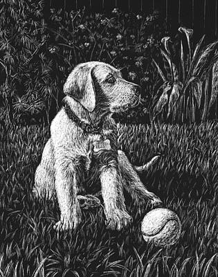 Animals Drawings - A Puppy With The Ball by Irina Sztukowski