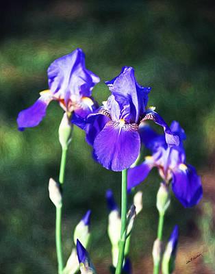 Painting - A Purple Iris Family by John Haldane