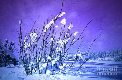 Photograph - A Purple Winter by Tara Turner