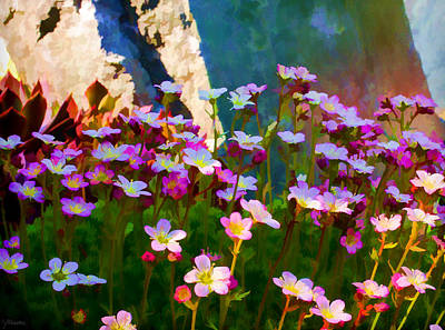 Photograph - A Quiet Moment In A Secret Garden by Jordan Blackstone