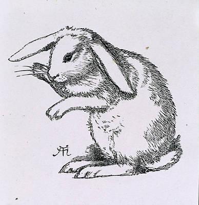 Christina Photograph - A Rabbit by British Library