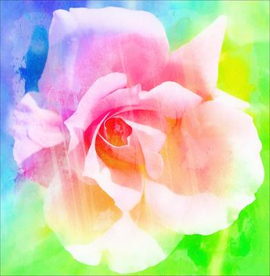 A Rainbow Of A Rose Art Print by Cathie Tyler
