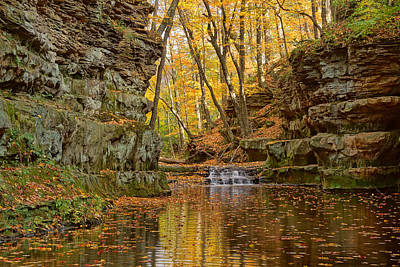 Photograph - A Ravine Full Of Color by Leda Robertson