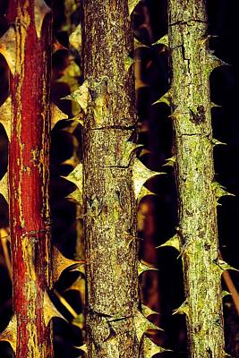 Photograph - A Real Thorny Situation by Beth Akerman