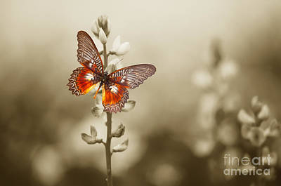 Spring Landscape Photograph - A Red Butterfly On The Moody Field by Michal Bednarek