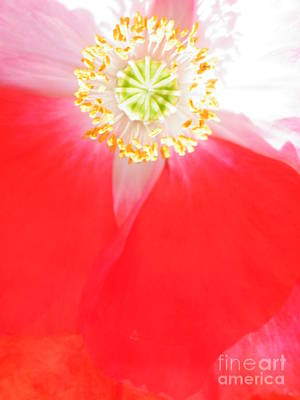 Photograph - A Red Kimono In The Garden by Brian Boyle