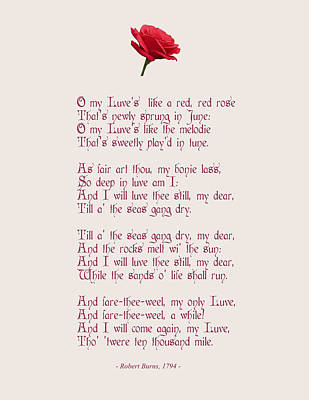 A Red Red Rose With Decorative Font Art Print