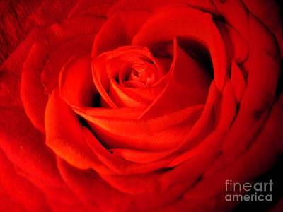 Photograph - A Red Rose by Joan-Violet Stretch