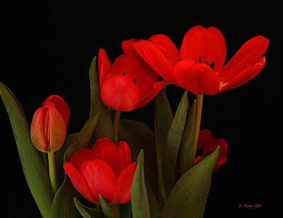 Photograph - A Red Tulip Day by Roena King