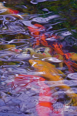 Photograph - A Reflection On Koi by Tim Good
