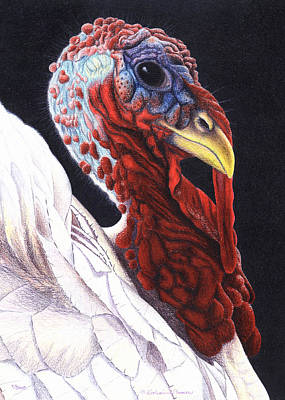 Turkey Drawing - A Regal Fellow by Katherine Plumer