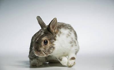 A Rescued Domestic Rabbit Art Print