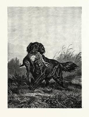 Dog Retrieving Drawing - A Retriever. After Deiker. A Type Of Gun Dog That Retrieves by English School