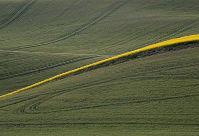 Photograph - a Ribbon of Canola by Doug Davidson