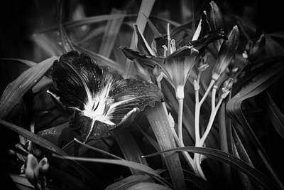 Photograph - A Riot Of No Color by Belinda Greb