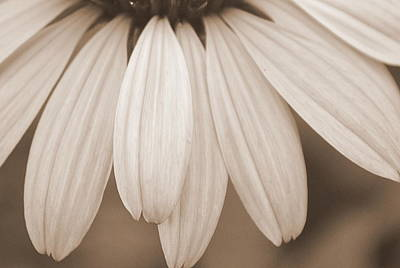 White Flowers Photograph - A Ripple Of Petals by Michelle Ayn Potter