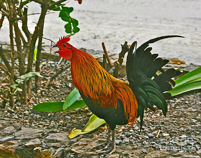 Photograph - A Rooster Wake Up Crowing by Joan McArthur