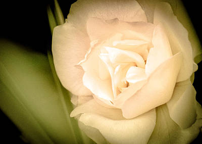 Photograph - A Rose Among Shadows And Grasses by Ronda Broatch