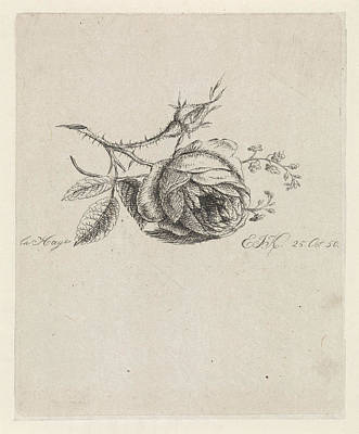 Forget Me Not Flowers Drawing - A Rose And Forget-me-nots, Elisabeth Johanna Koning by Elisabeth Johanna Koning
