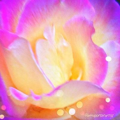 Vivid Photograph - A Rose By Any Other Name by Anna Porter
