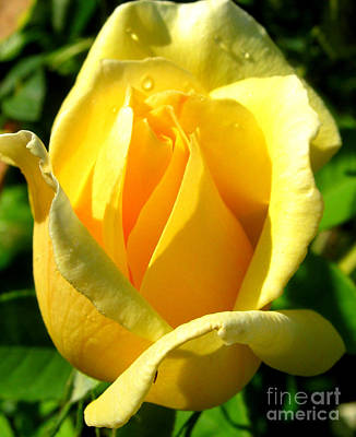Art Print featuring the photograph A Rose For My Friend by Janice Westerberg