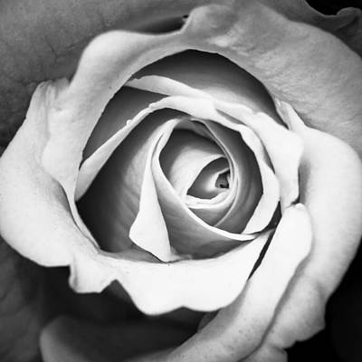 Art Print featuring the photograph A Rose In Black And White by Wade Brooks